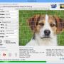 AndreaMosaic for Mac 3.50.1 screenshot