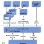 cFos IPv6 Link Windows (x64 bit) 2.52 B1120 screenshot