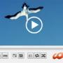 HD Video Media Player for Mac OSX 2018 screenshot